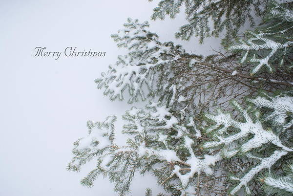 Photograph - Winter Lace by Joanne Smoley