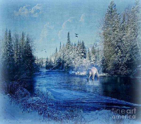 Bear Country Wall Art - Photograph - Winter Paradise by Lianne Schneider