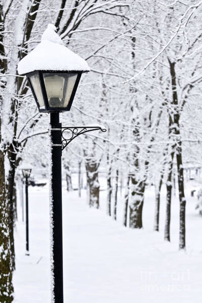 Wall Art - Photograph - Winter Park by Elena Elisseeva