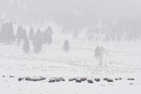 Photograph - Winter Storm by D Robert Franz