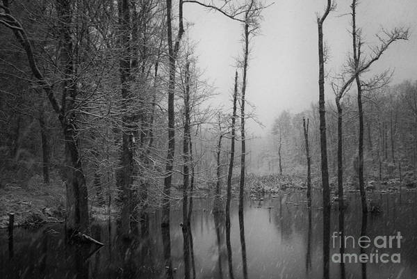 Photograph - Winter Storm by David Waldrop