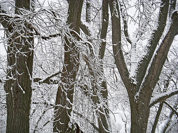 Mendon Photograph - Winter Trees  by Aimee L Maher ALM GALLERY