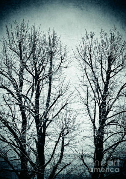 Photograph - Winter Trees II by Silvia Ganora