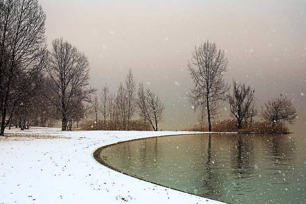 Wall Art - Photograph - Winter Trees by Joana Kruse