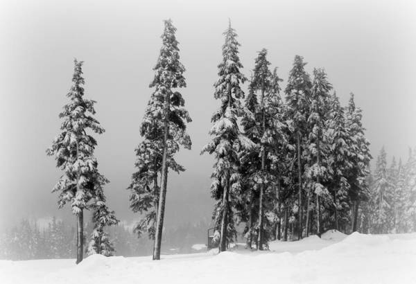 Photograph - Winter Trees On Mount Washington by Marilyn Wilson