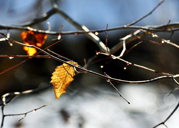 Photograph - Winter Tribute by Rebecca Sherman
