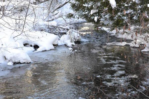 Photograph - Winter Walk 1 by Pamela Lee