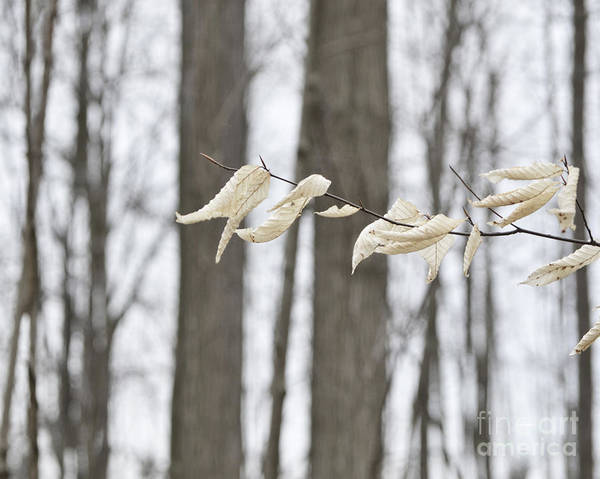 Photograph - Winter White by Traci Cottingham
