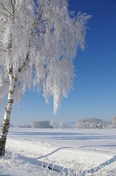 Ruhe Photograph - Winterland by Tanja Riedel