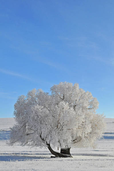 Photograph - Winter's Coat In Montana's Gallatin Valley by Bruce Gourley