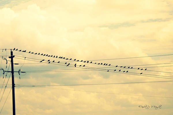 Photograph - Wires With Many Birds On Them by Paulette B Wright