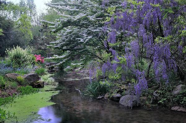 Wisteria Wall Art - Photograph - Wisteria On The River by Don Schroder