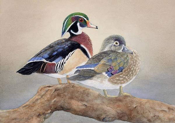 Wall Art - Painting - Wood Duck Couple by Cherry Woodbury