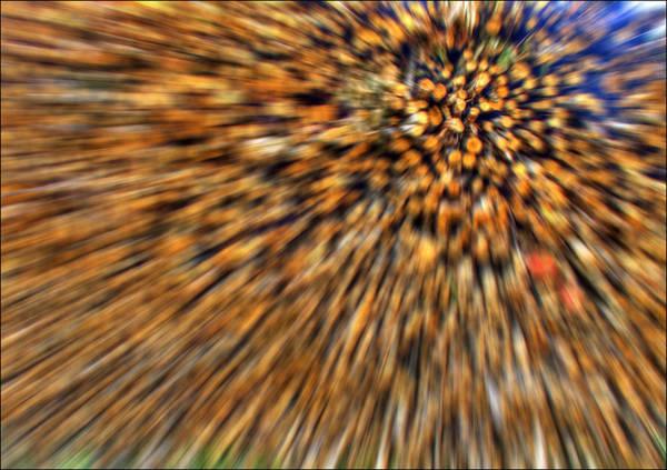 Wood Pile Photograph - Wood Pile Blur by Nigel Jones