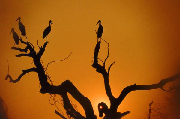 Wall Art - Photograph - Wood Storks by John Foxx