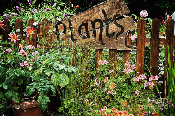 Gardens Photograph - Wooden Plant Sign In Flowers by Simon Bratt Photography LRPS