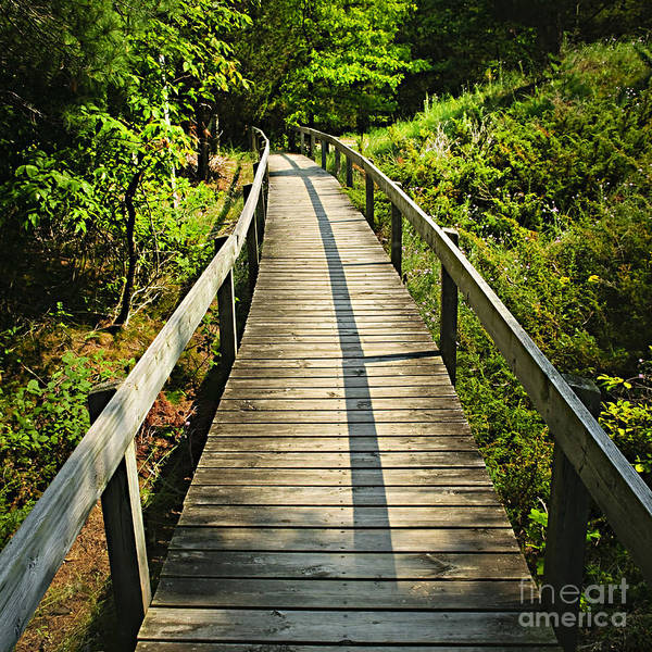 Hiking Path Photograph - Wooden Walkway Through Forest by Elena Elisseeva