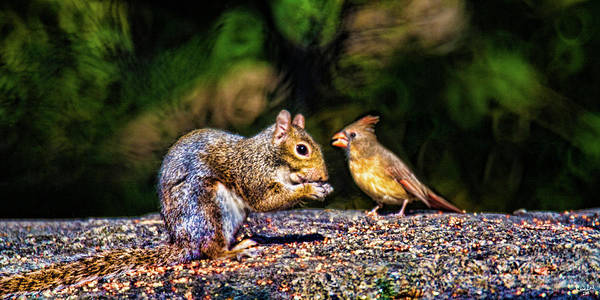 Photograph - Woodland Friends by Chris Lord