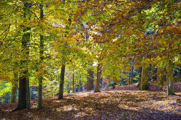 Photograph - Woodland In Fall by Rob Hemphill