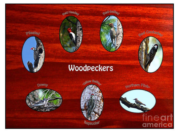 Photograph - Woodpeckers by Barbara Bowen