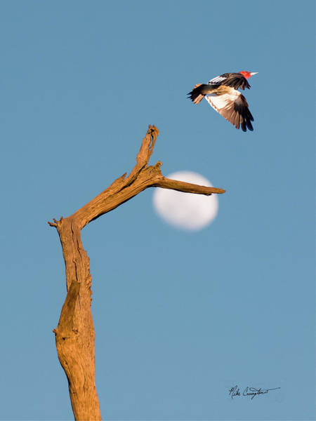 Photograph - Woody Flying By The Moon by Mike Covington