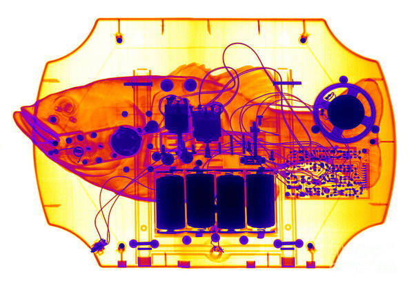 Photograph - X-ray Of Mechanical Fish by Ted Kinsman