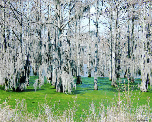 Photograph - Yazoo Swamp by Lizi Beard-Ward
