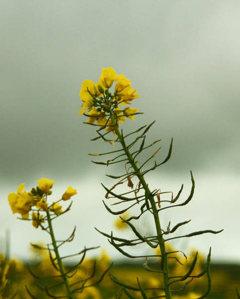 Photograph - Yellow And Grey by Jacqui Collett
