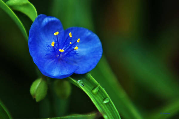 Photograph - Yellow Blue And Raindrops by Edward Peterson
