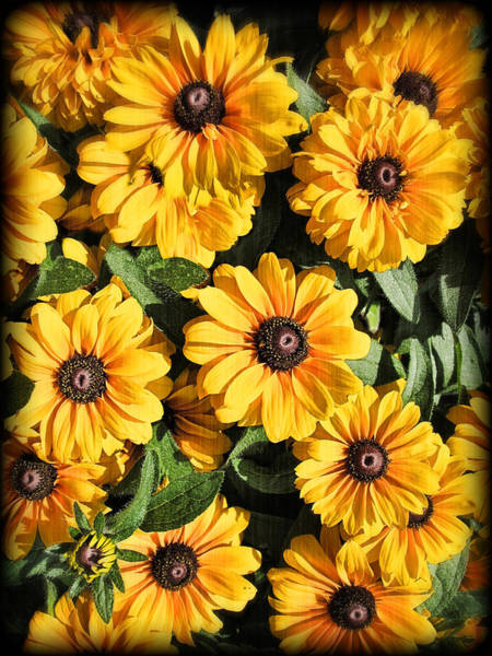 Photograph - Yellow Coneflowers - Black-eyed Susans Against A Textured Background - Vignette Photography by Chantal PhotoPix