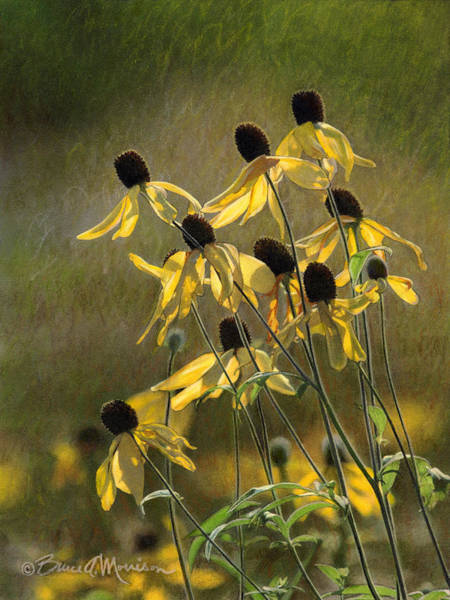 Drawing - Yellow Coneflowers by Bruce Morrison