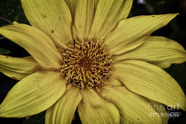 Little Things Photograph - Yellow Contrast by Cris Hayes