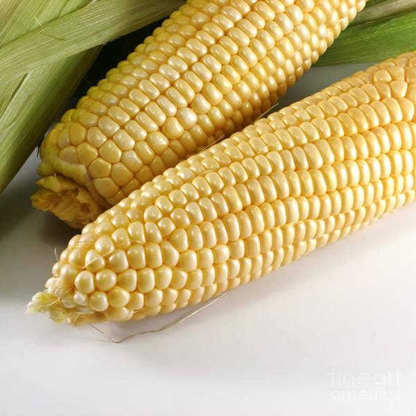 Row Crops Photograph - Yellow Corn by Blink Images