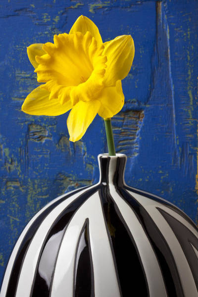 Yellow Trumpet Wall Art - Photograph - Yellow Daffodil In Striped Vase by Garry Gay