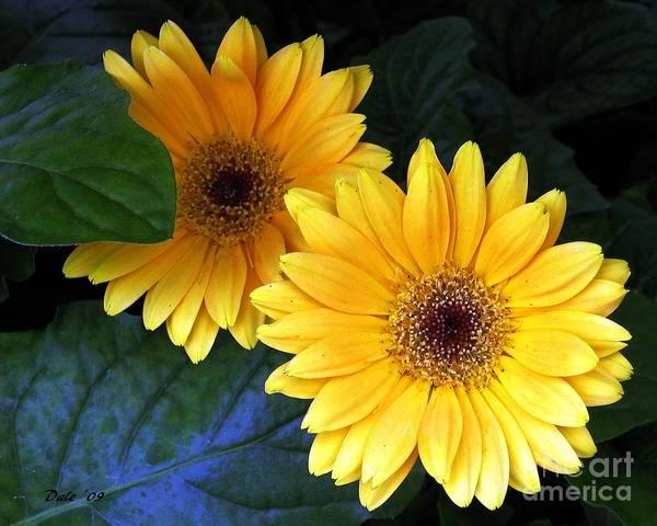 Digital Art - Yellow Dahlias by Dale   Ford
