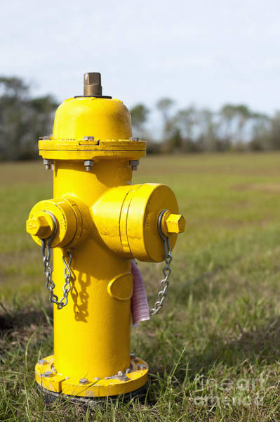 Water Hydrant Photograph - Yellow Fire Hydrant by Sam Bloomberg-rissman