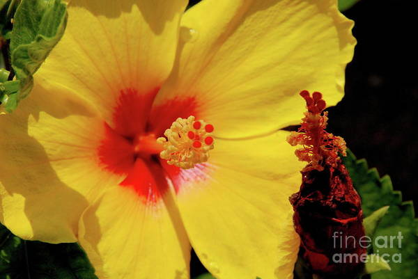 Photograph - Yellow High by Ken Williams