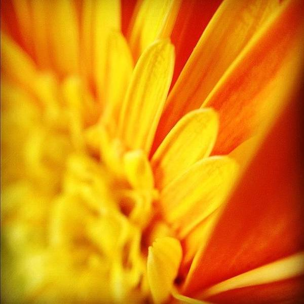 Wall Art - Photograph - Yellow Hope Of Days To Come by Christopher Campbell