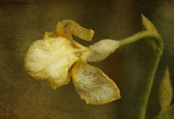 Wall Art - Digital Art - Yellow Iris by Margaret Hormann Bfa