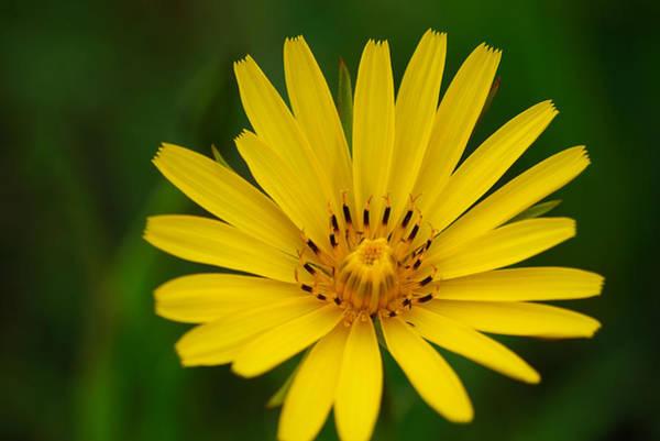 Photograph - Yellow by Ivan Slosar