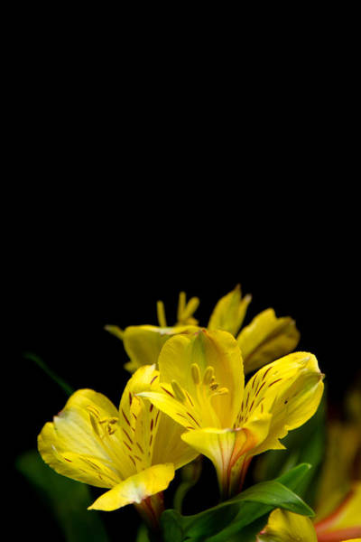 Photograph - Yellow by Jason Smith