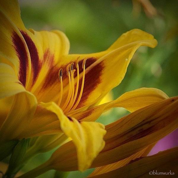 Macro Photograph - Yellow by Matthew Blum