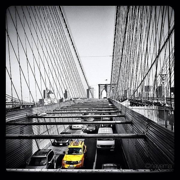 Monochrome Photograph - Yellow by Natasha Marco