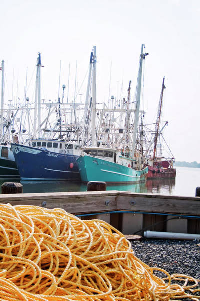 Photograph - Yellow Rope And Boats by Tom Singleton