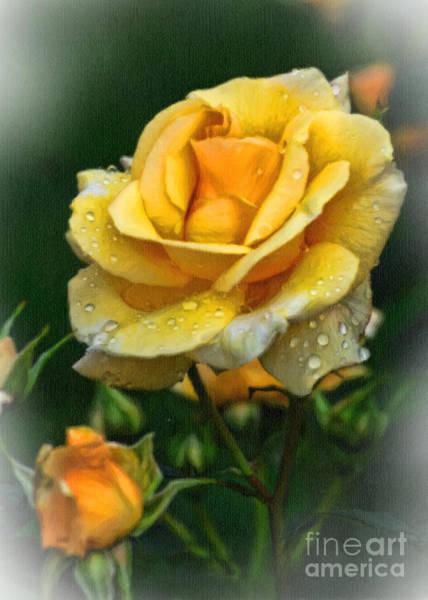 Wall Art - Photograph - Yellow Rose Ds by Edward Sobuta