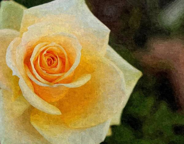 Photograph - Yellow Rose In Digital Oil by Sarah Broadmeadow-Thomas