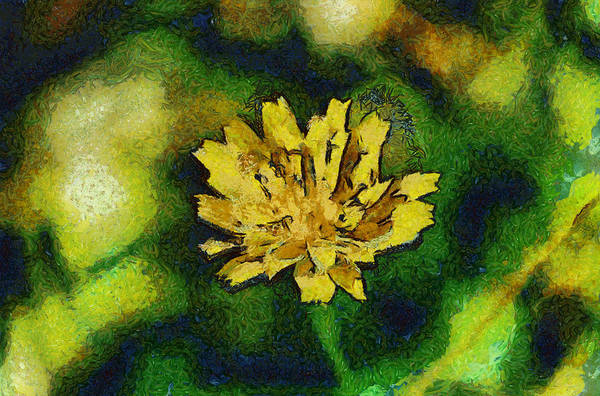 Photograph - Yellow Widflower by Michael Goyberg