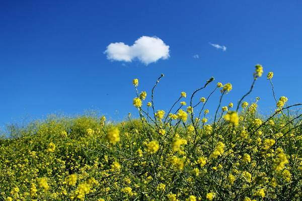 Photograph - Yellow Wildflowers Under A Blue Sky by Sarah Broadmeadow-Thomas