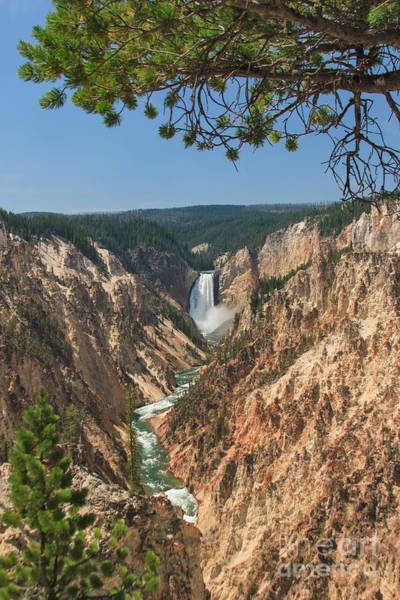 Photograph - Yellowstone Lower Falls From Artist Point by Charles Kozierok
