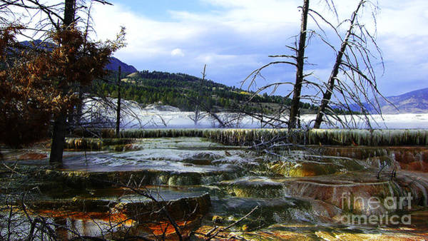 Photograph - Yellowstone National Park 5 by Xueling Zou